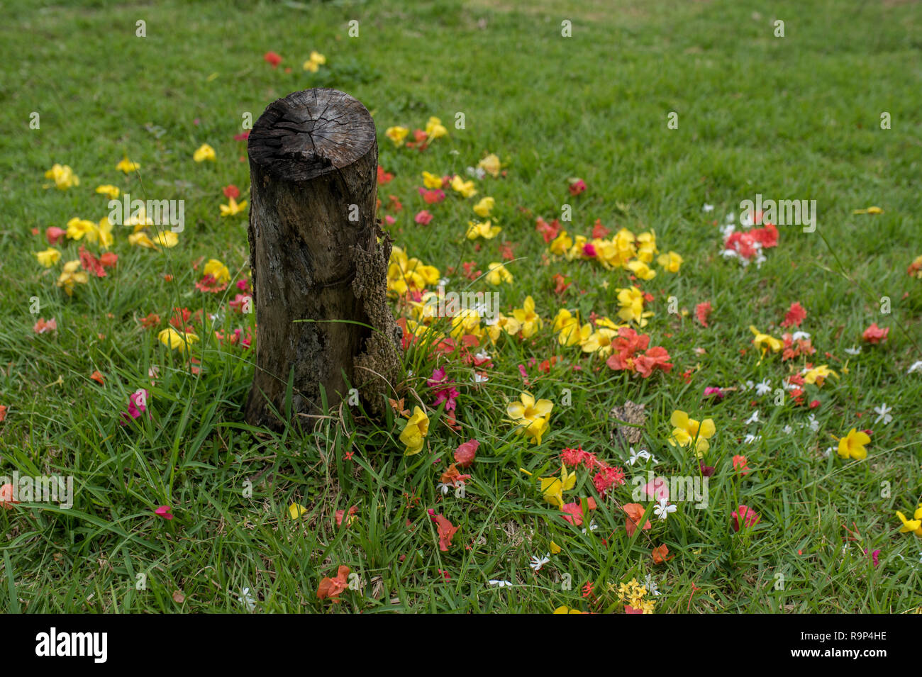 sprinkled flowers on the stone - Stock Image