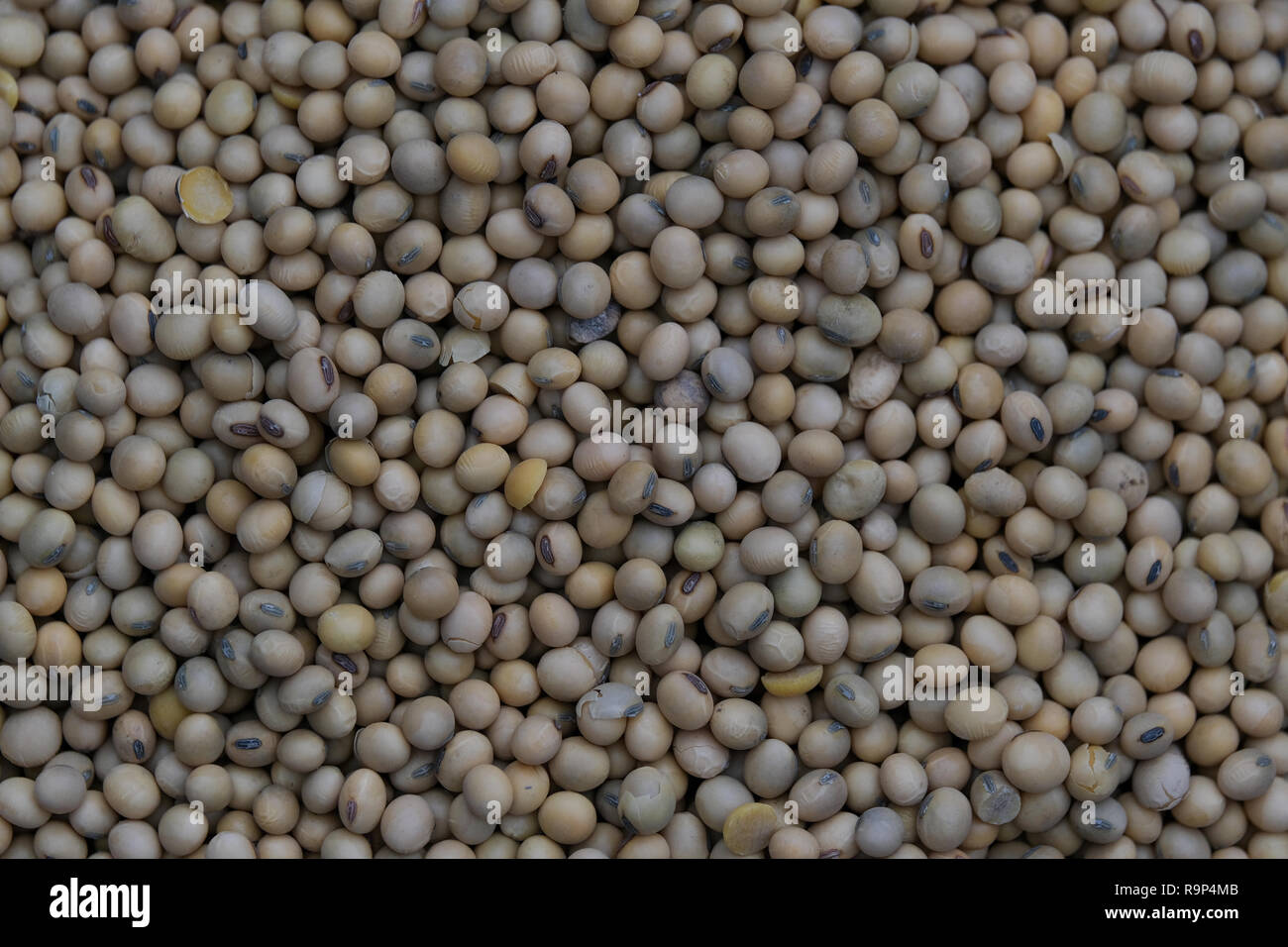 Soya bean seed, soybeans or Glycine max. Royalty high-quality free stock image heap of Soya bean seed, soybeans background with copy space - Stock Image