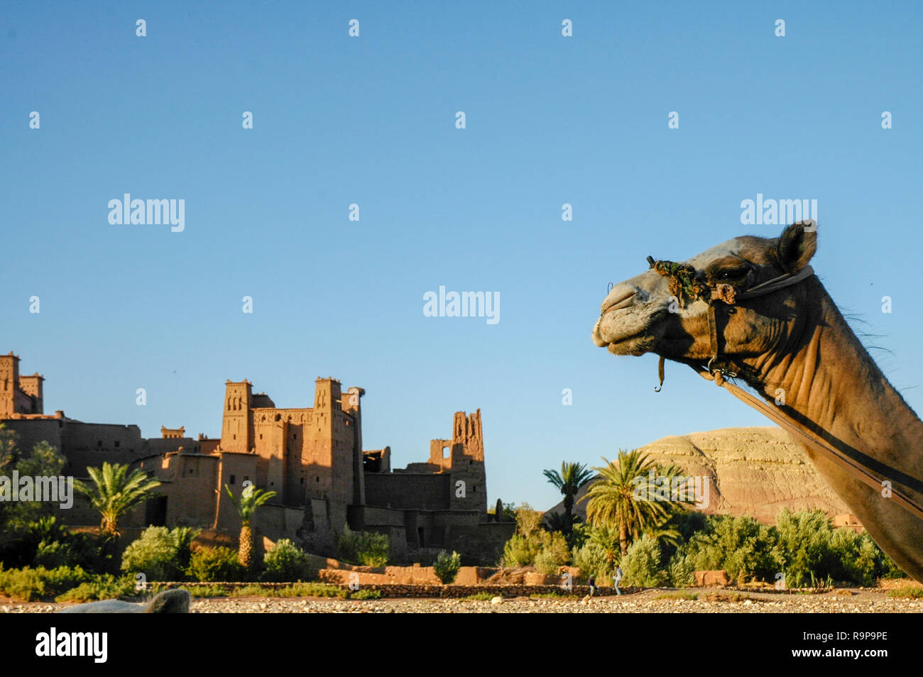 the famous casbah of Art Benhaddou in Maroc - Stock Image