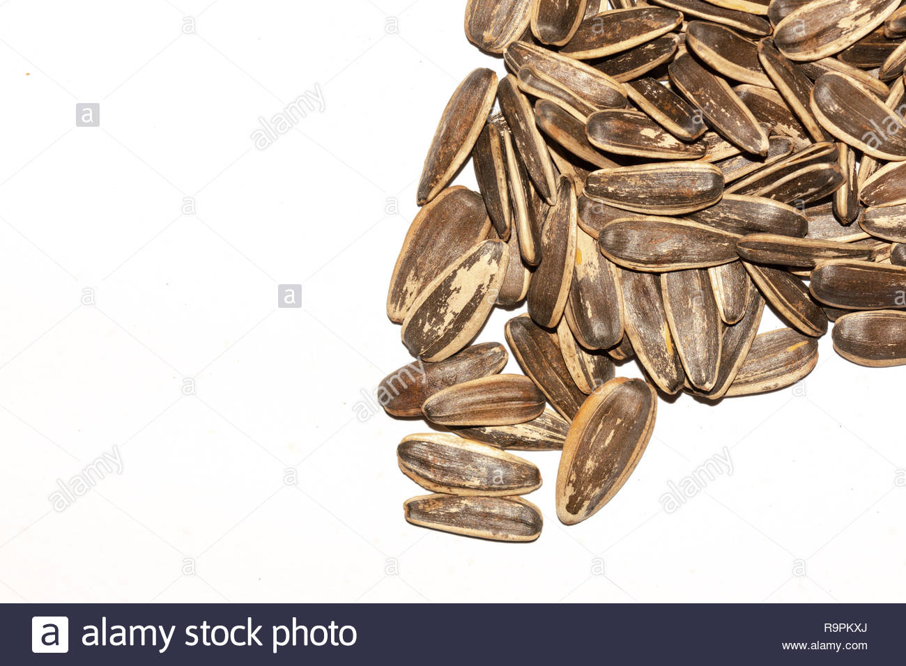 brown sunflower seeds for food or snacks isolated white background - Stock Image