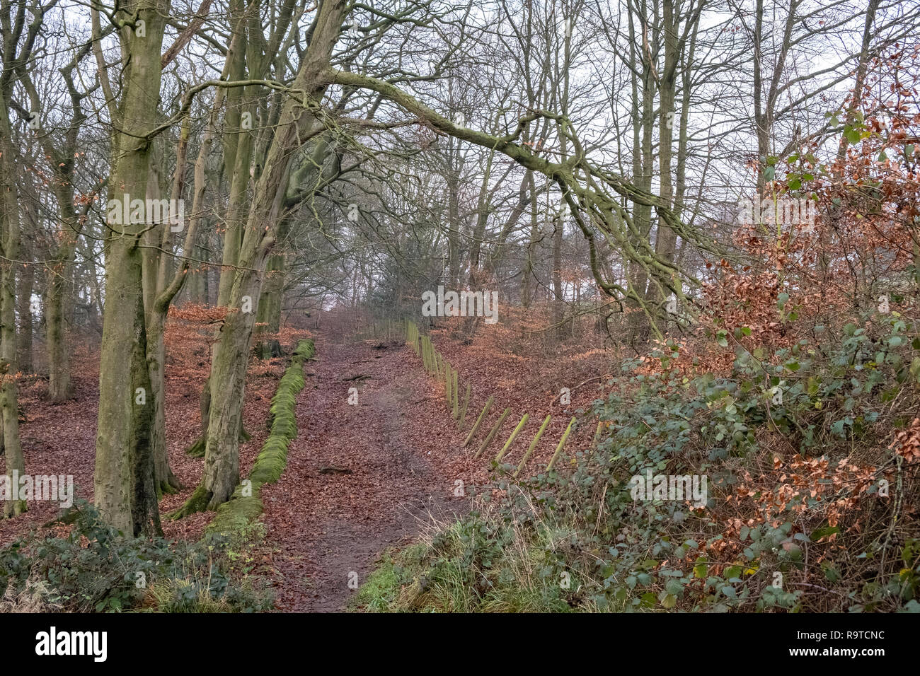Chellow Dene Bradford Yorkshire England Stock Photo