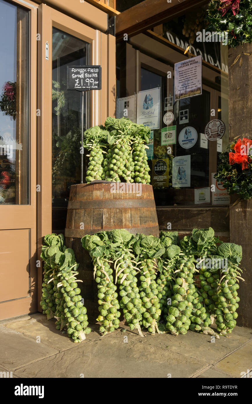 Brussel Sprouts on stalks displayed around an old wooden