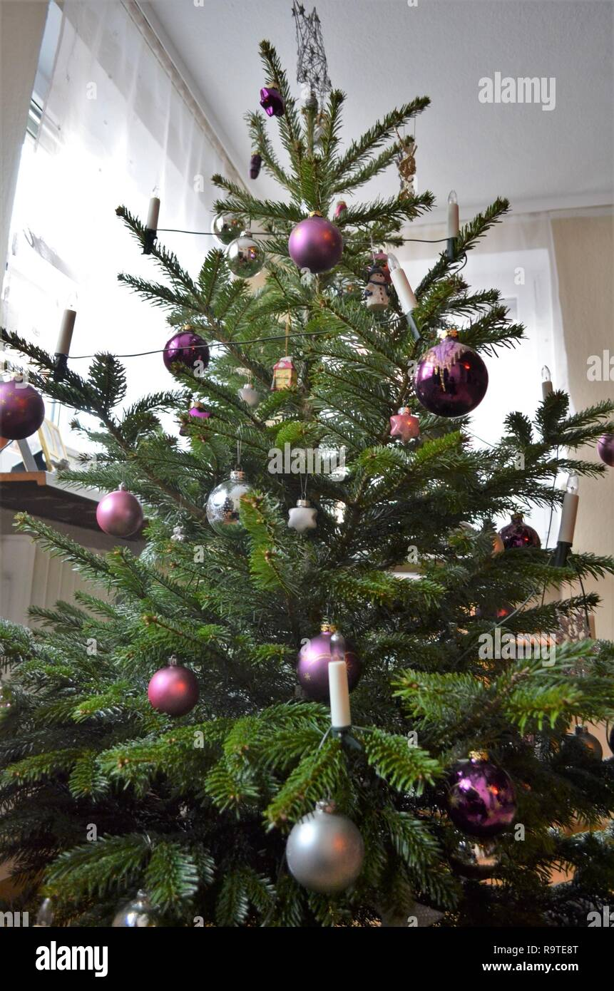 decorated christmas tree in the living room, silver and purple ball decorations on a green fir Stock Photo