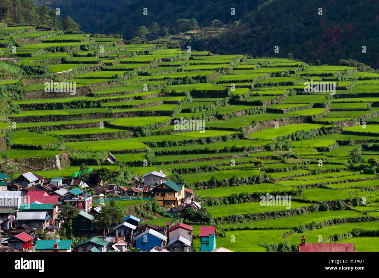 Banaue Rice Terraces in the Philippines, where farmers use terraces to produce crops. Rice terraces sometimes called Eighth Wonder of the World. - Stock Image