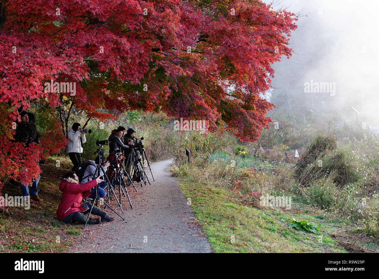 Lots of Photographers Taking Pictures of Mt. Fuji and autumn leaves Background Kawaguchiko Town Yamanashi Japan - Stock Image