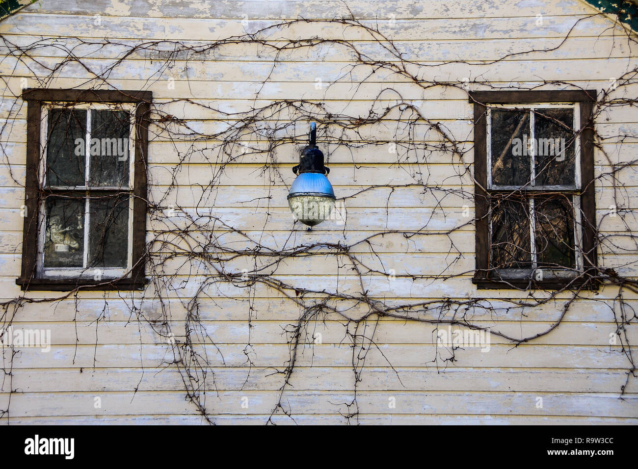 Vintage blue street light, and vines on the front of an old building. - Stock Image