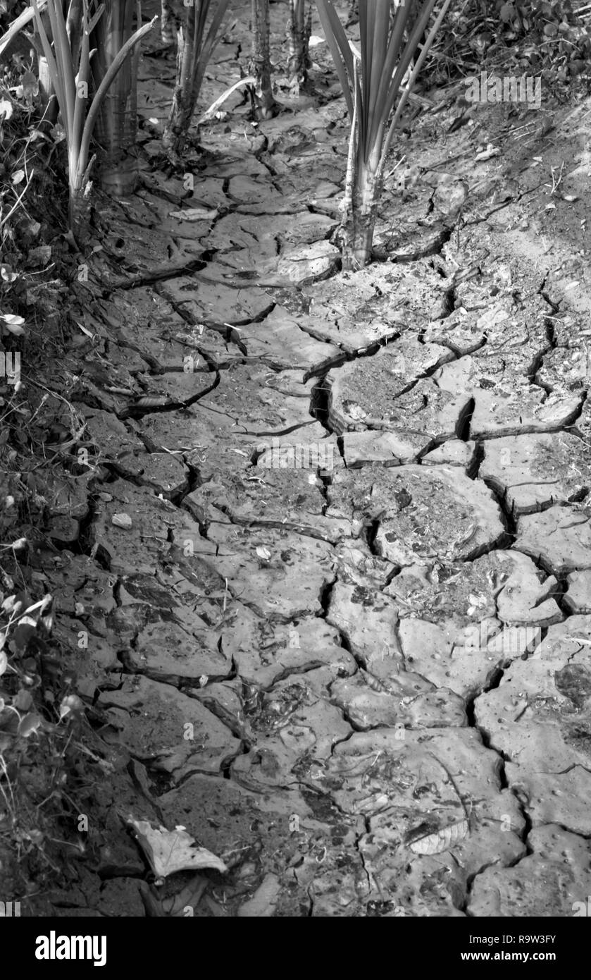 Parched soil near Drumheller, Alberta, Canada, during scorching hot summer of 2017 stoked fears of drought and global warming on the Prairies. - Stock Image