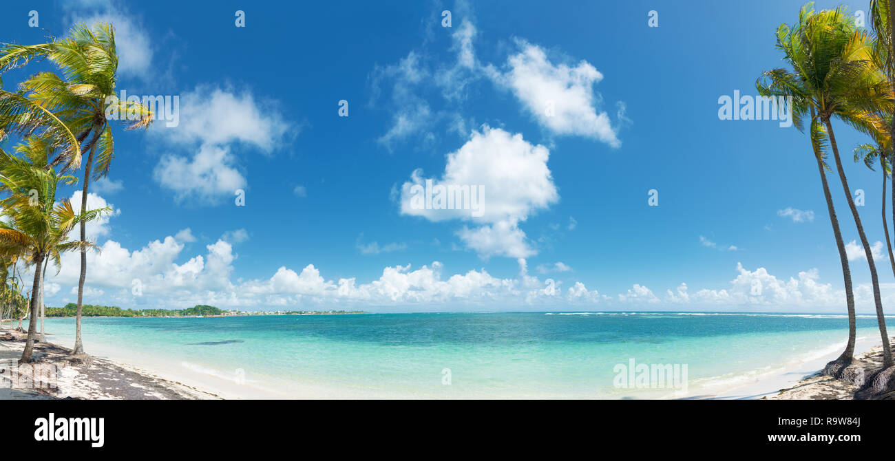 Blue sky,coconuts trees,  turquoise water and golden sand, panoramic view of Caravelle beach, Saint Anne, Guadeloupe, French West Indies. - Stock Image