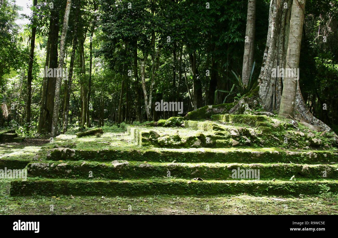 Ancient Mayan ruins overgrown in the jungles of Belize - Stock Image