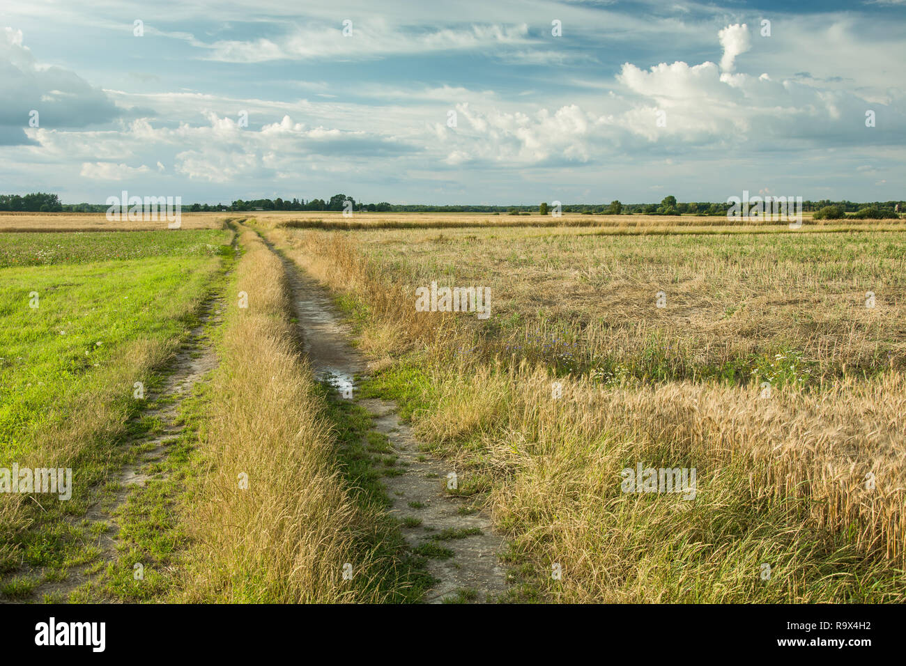 Unpaved road through the fields - Stock Image