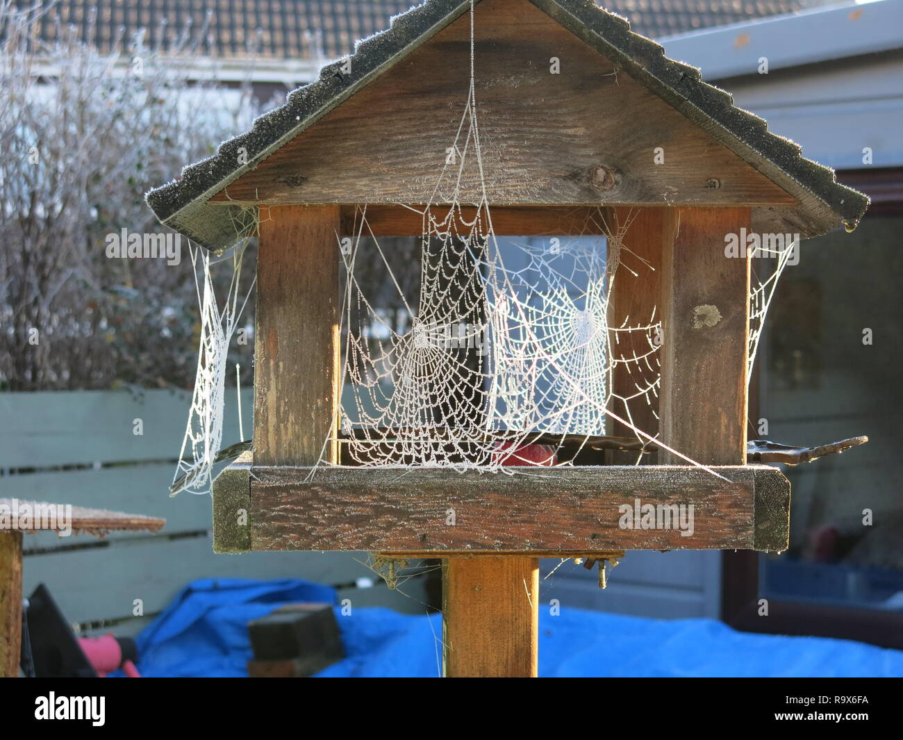 A very hard frost highlights the complex architecture and beauty of spiders' webs on a frosty bird-table in a Scottish garden. - Stock Image