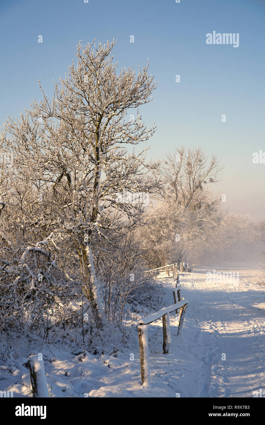 Trees at the field edge in winter Stock Photo