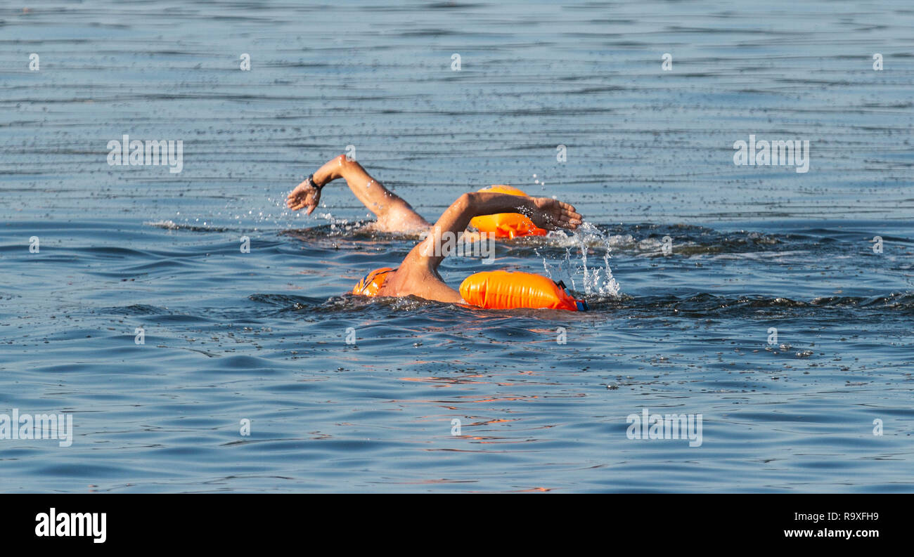 Two male swimmers are swimming outdoors in the Long Island Sound with orange flotation devices floating behind them for safety. Stock Photo