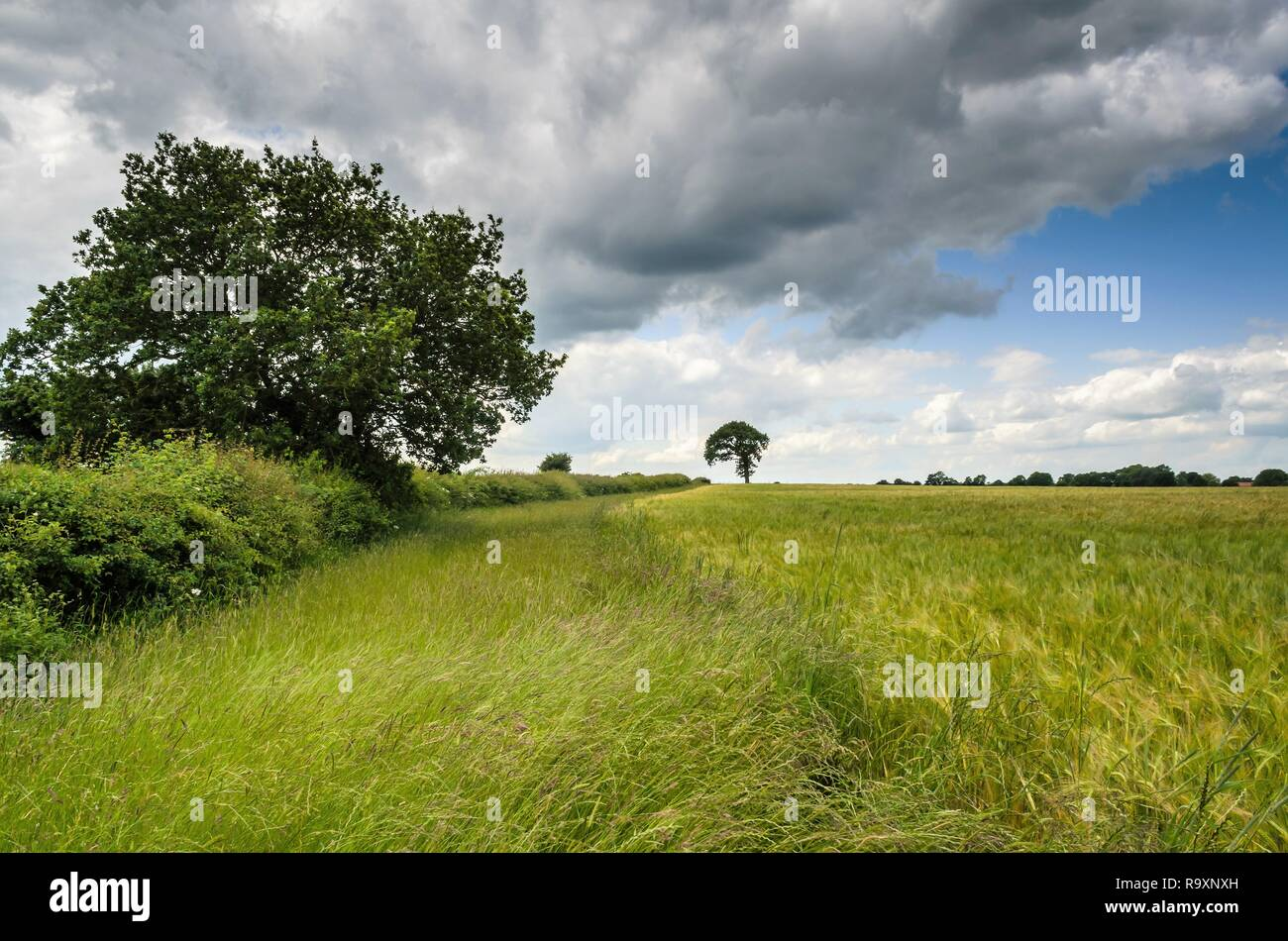 Summer Countryside Stock Photo