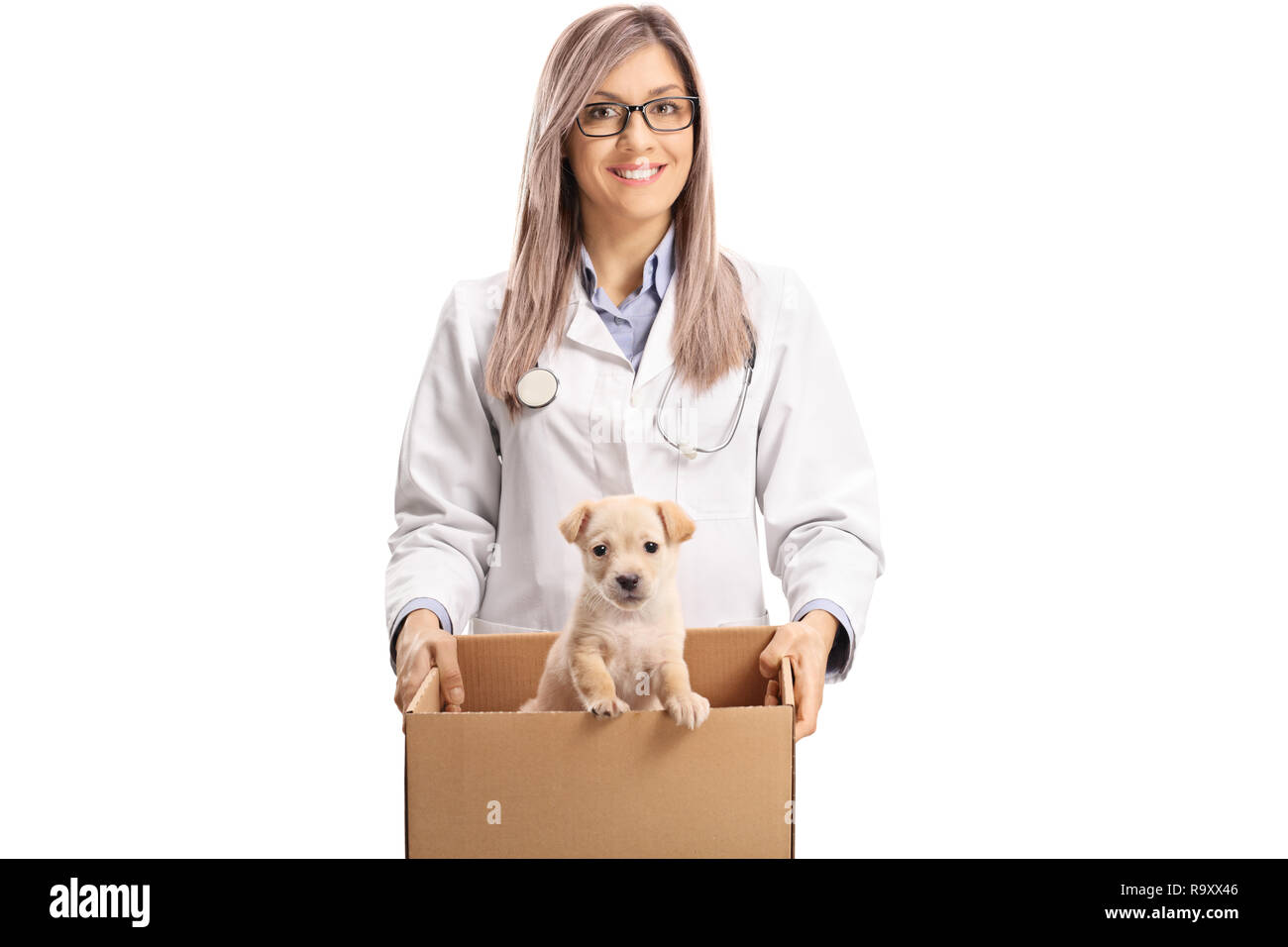 Young female vet doctor holding a puppy in a box isolated on white background - Stock Image