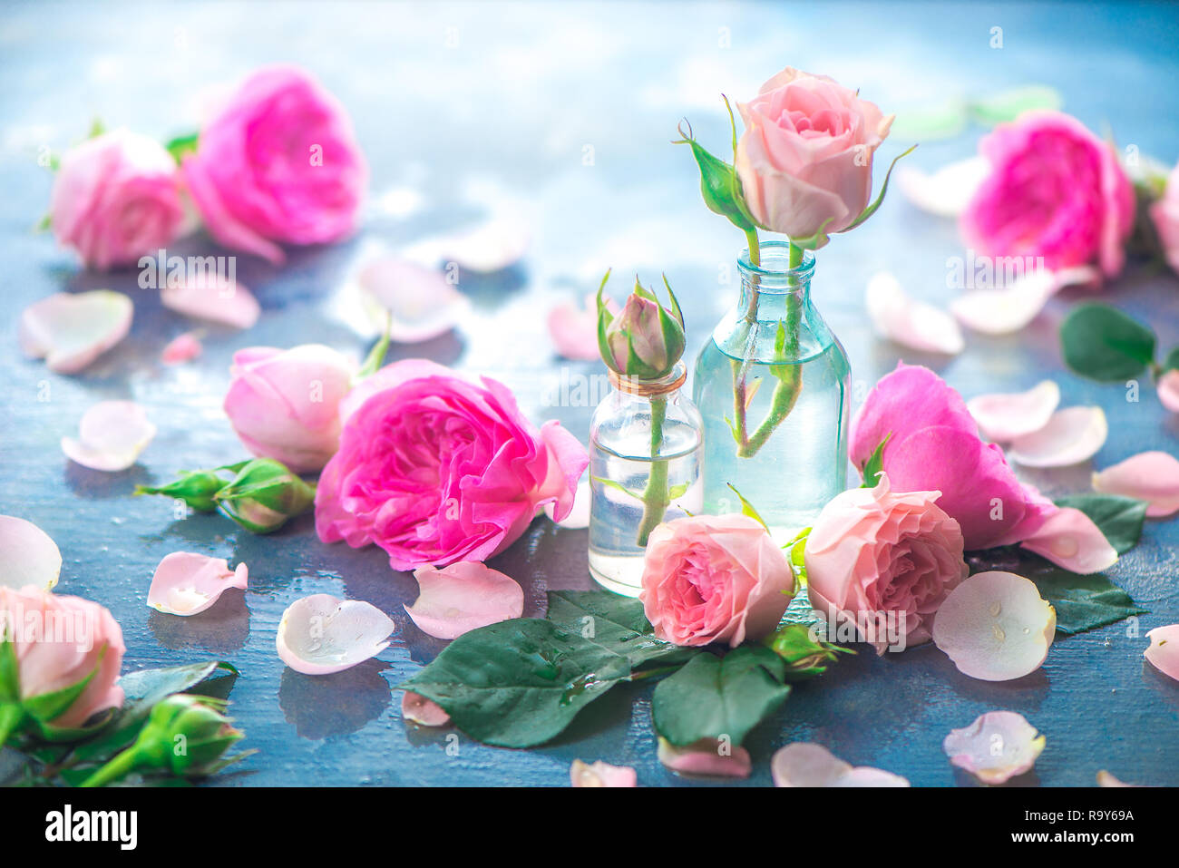Pink peony roses, petals, and leaves on a wet rainy background in the morning light. Spring header with copy space Stock Photo