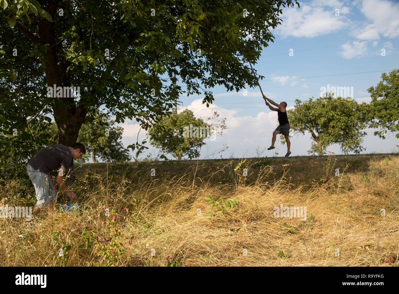 30.08.2016, Olanesti, Rajon Stefan Voda, Republik Moldau - Junge Maenner ernten Wallnuesse an einer Landstrasse. Alleen mit Walnussbaeumen sind ein ty - Stock Image
