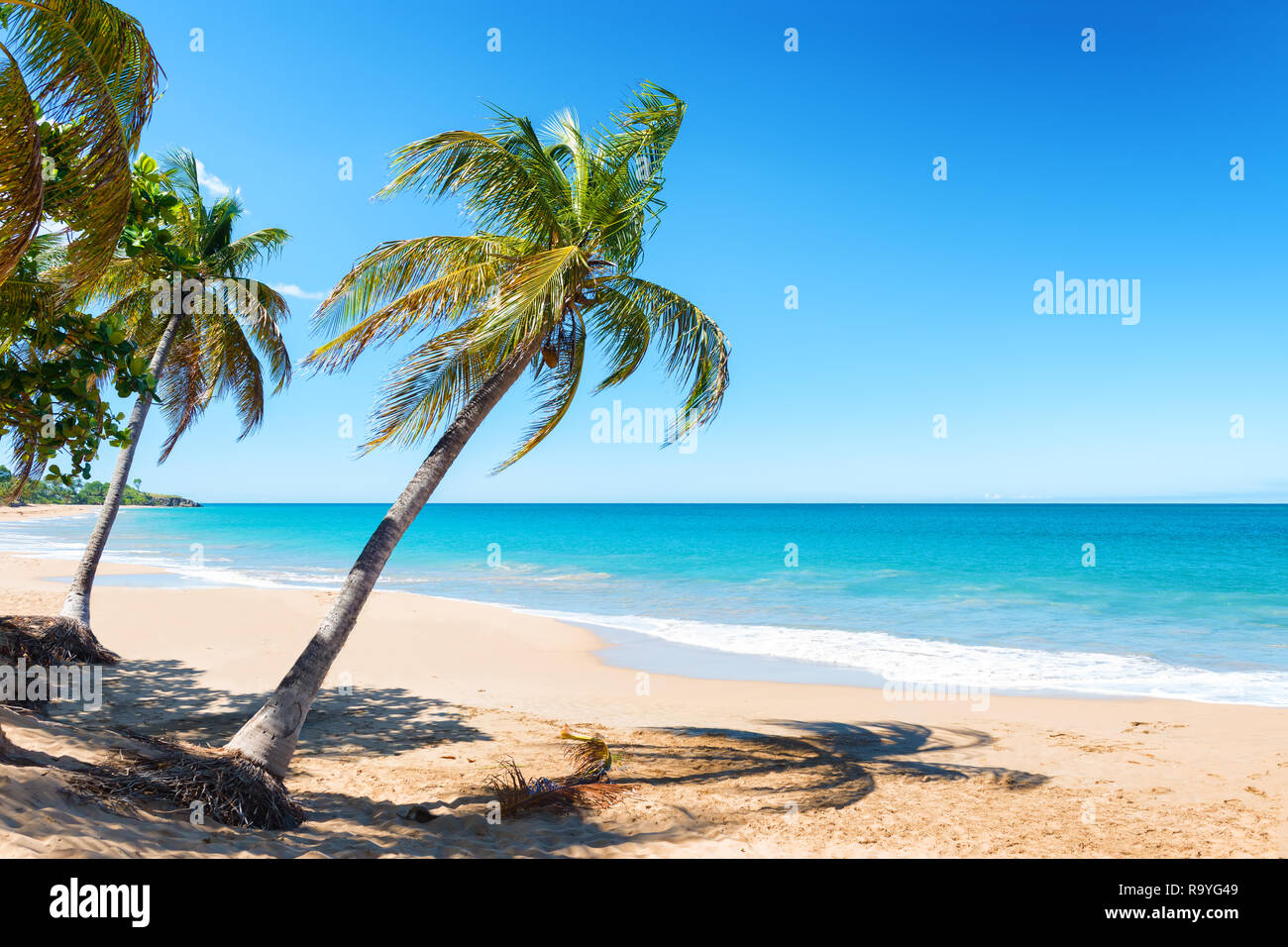 Coconut trees, golden sand, turquoise water and blue sky
