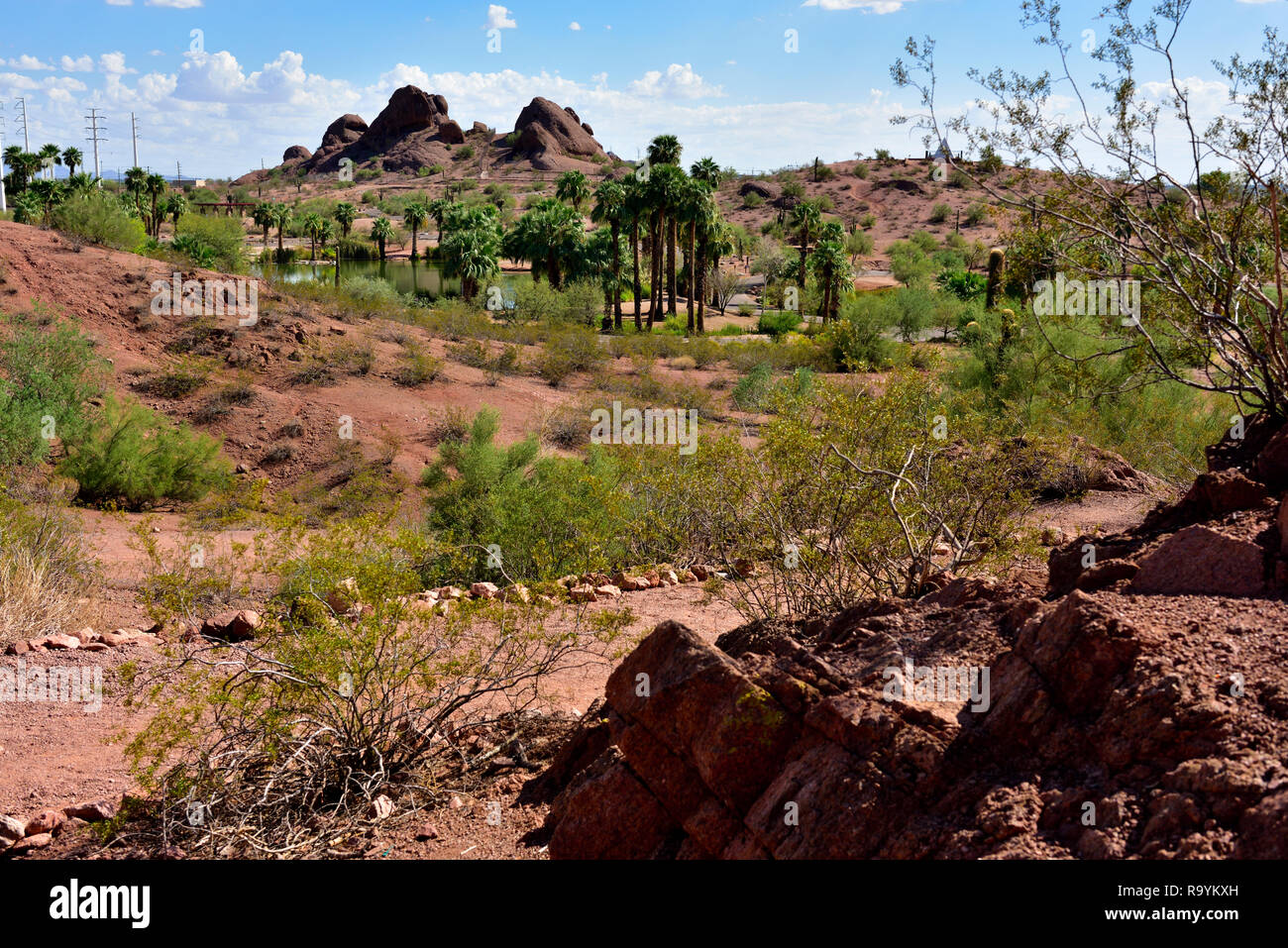 Papago municipal park in outskirts of  Phoenix and Tempe, AZ, with desert scenery plus small lake,  USA - Stock Image
