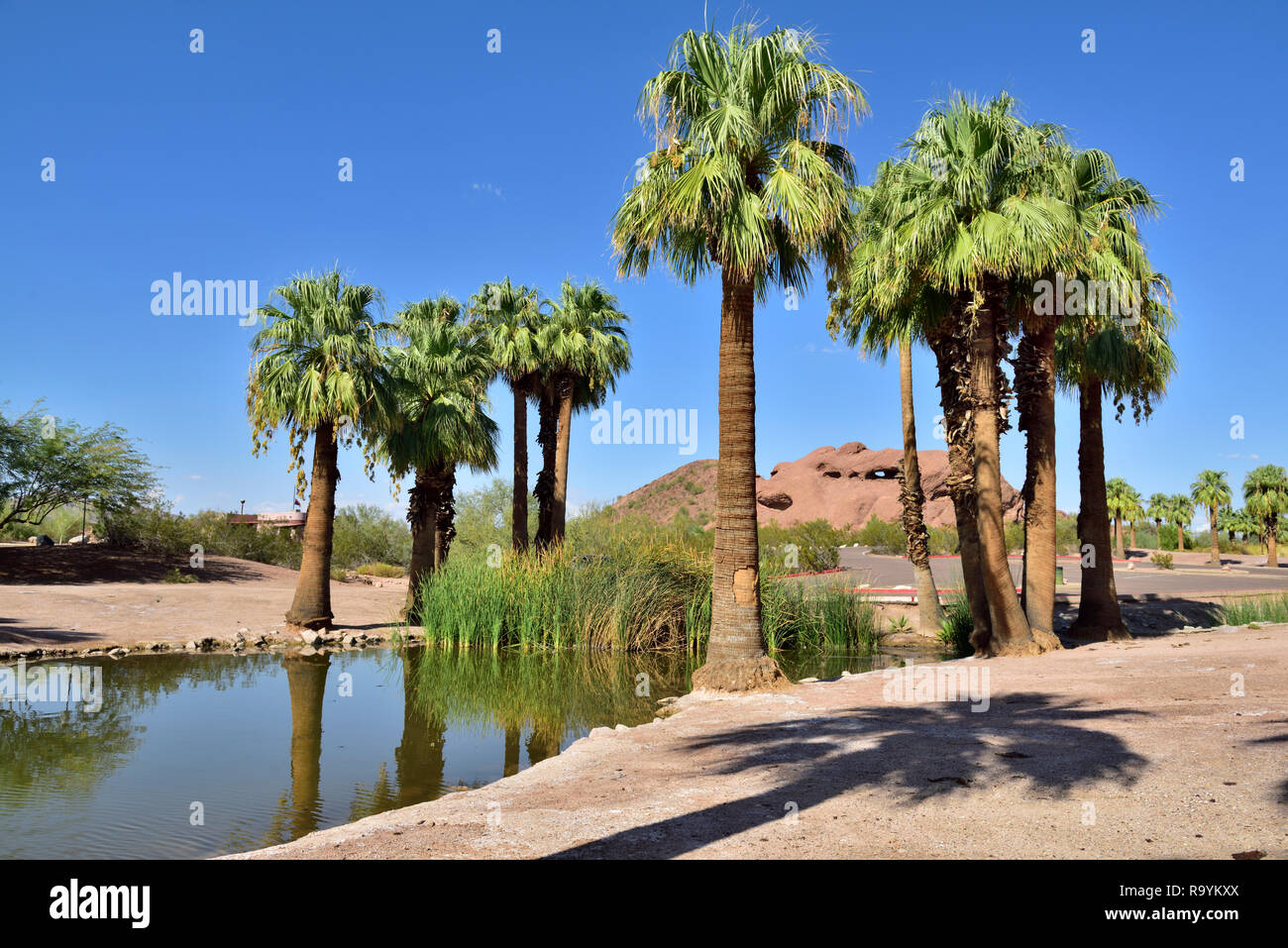 Papago municipal park in outskirts of  Phoenix and Tempe, AZ, with desert scenery plus small lake, palm trees,  USA - Stock Image