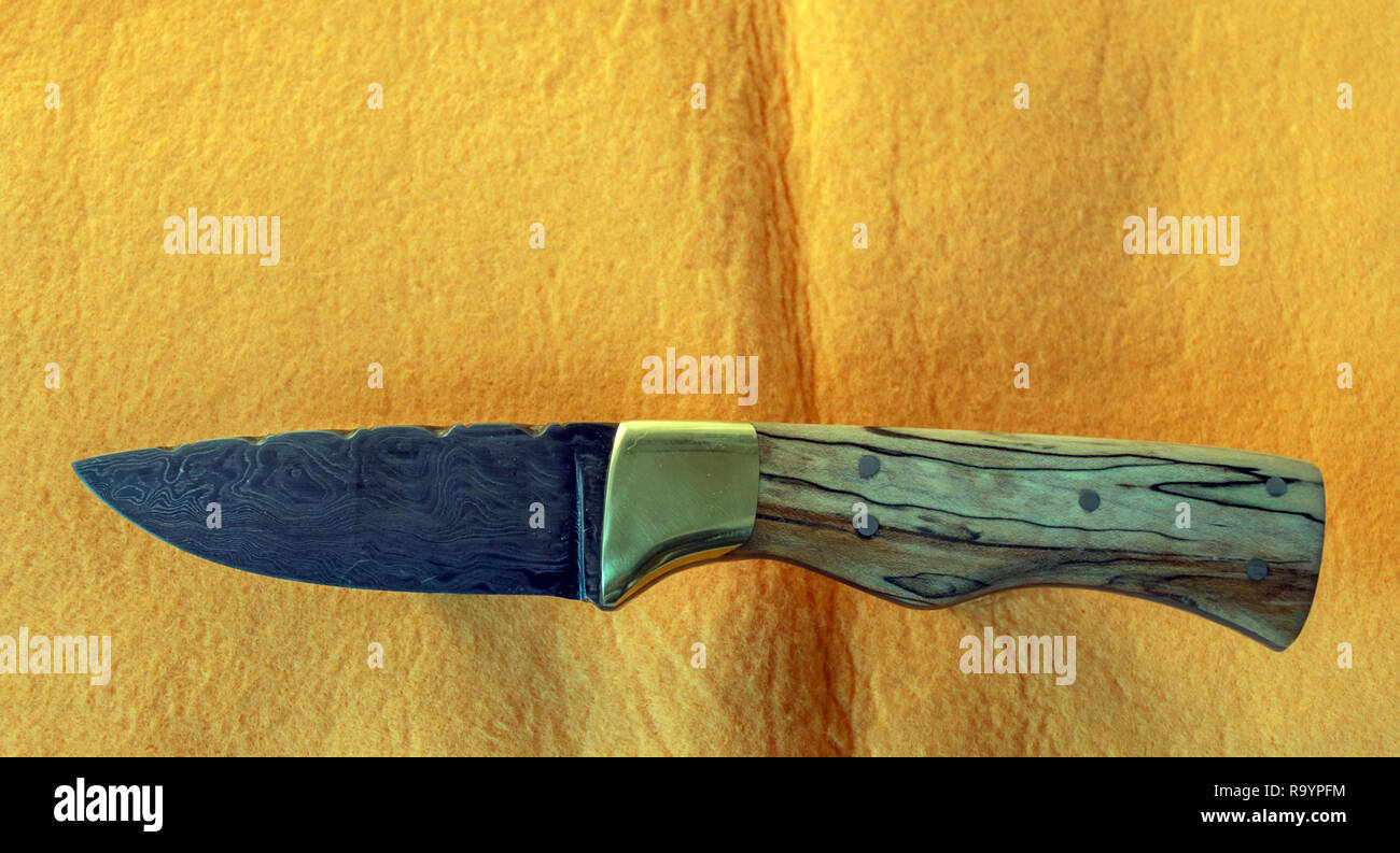 A beautiful Damascus fixed blade knife with spaulted maple handle against a yellow background. Stock Photo