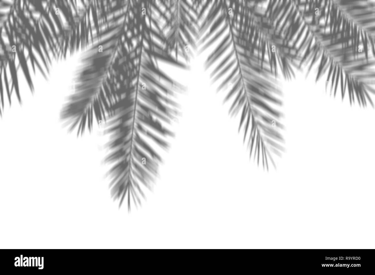 Summer abstract background of shadow exotic palm leaves on a white
