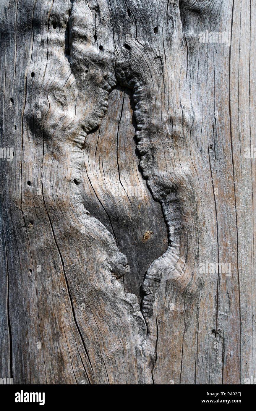 Abstract wood structure in a tree trunk - Stock Image