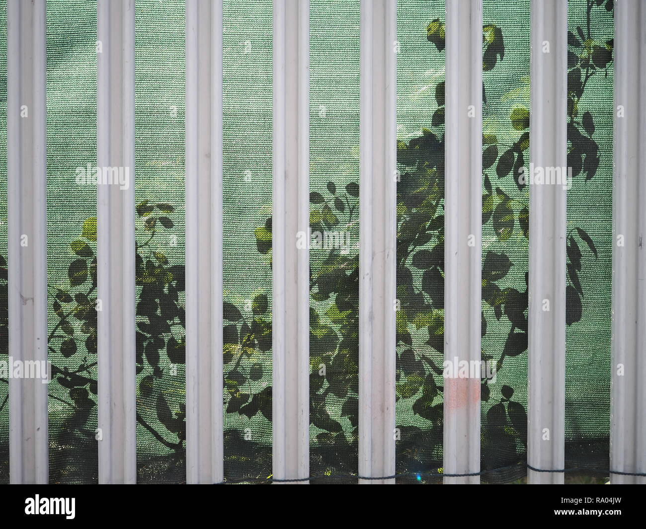 Leaves in shadow behind a metal fence - Stock Image