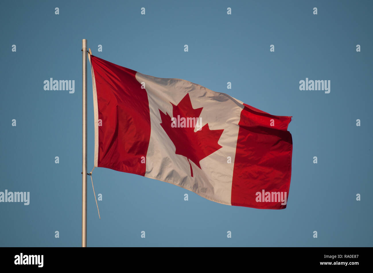 Canadian Flag on a flagpole waving in the breeze - Stock Image