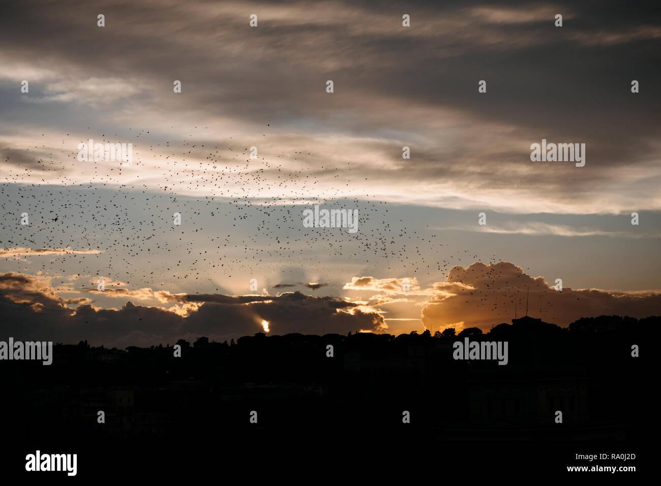 flocks of birds - Stock Image