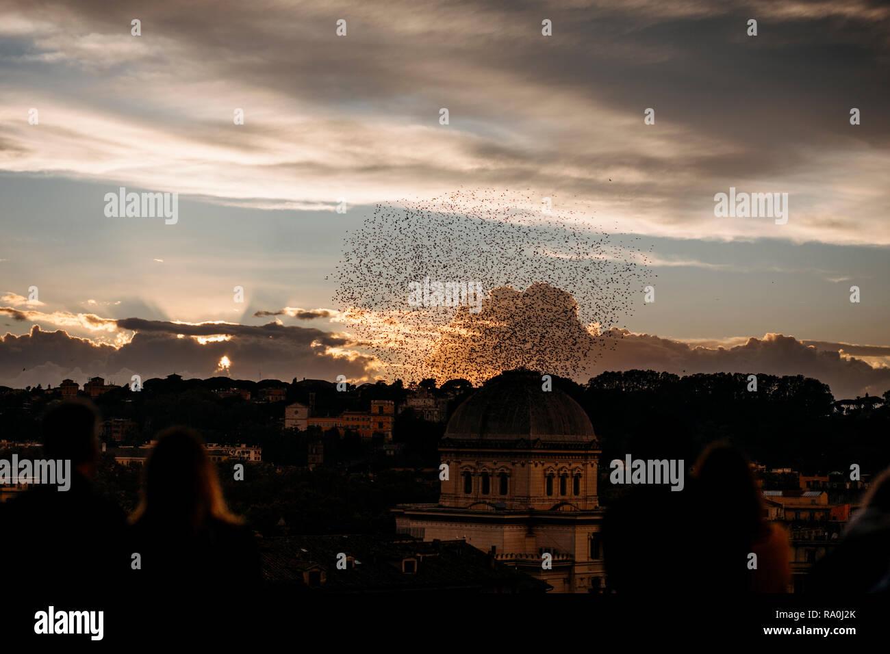 rome sunset flocks of birds - Stock Image