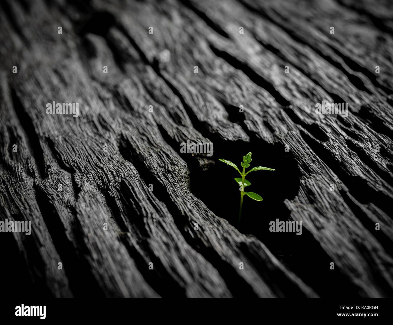 Shoot growing on dead wood, a message of hope and inspiration - Stock Image