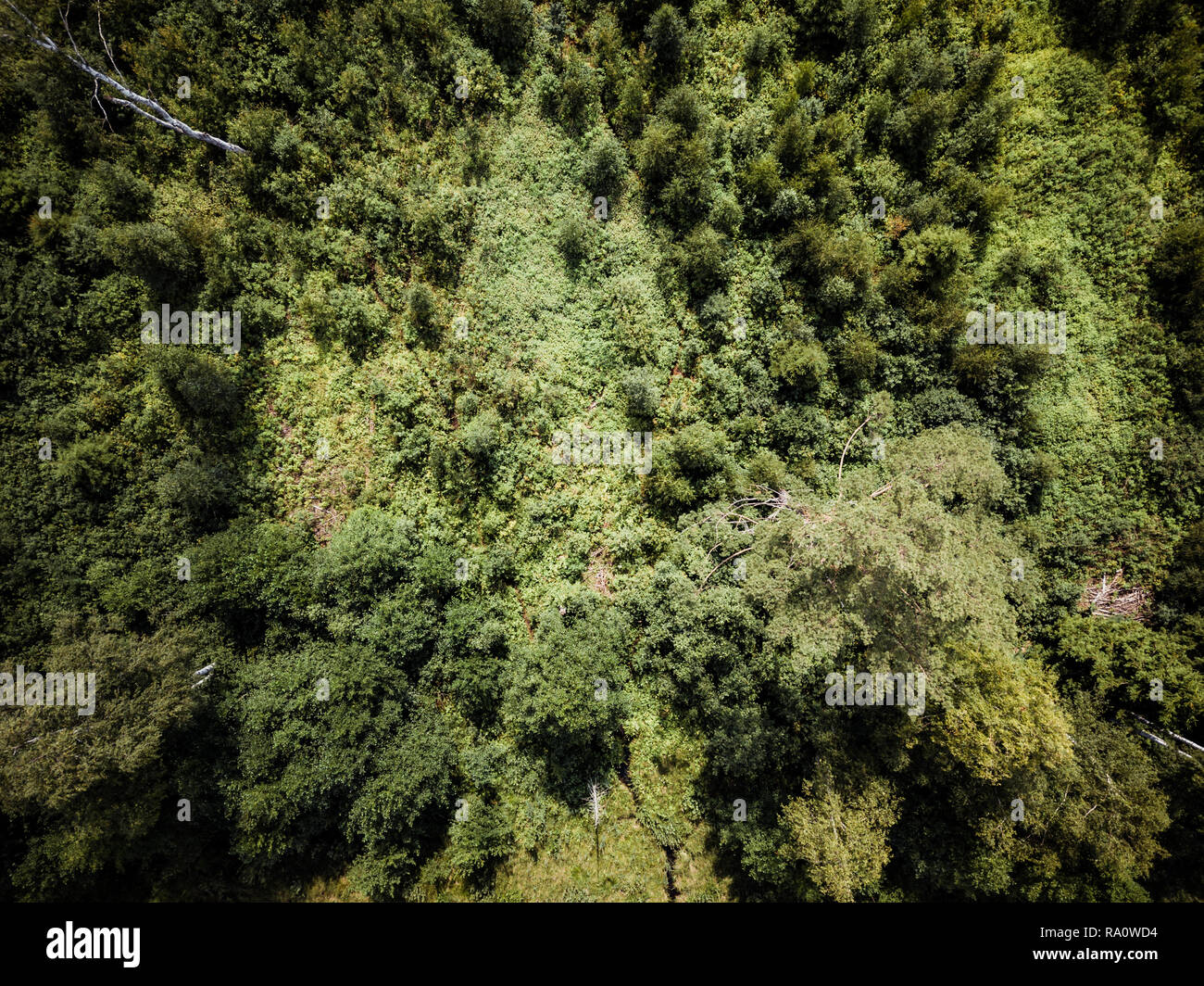 Aerial Drone Photo of the Countryside Forest, Top Down View in Sunny Summer Day - Background Material Stock Photo