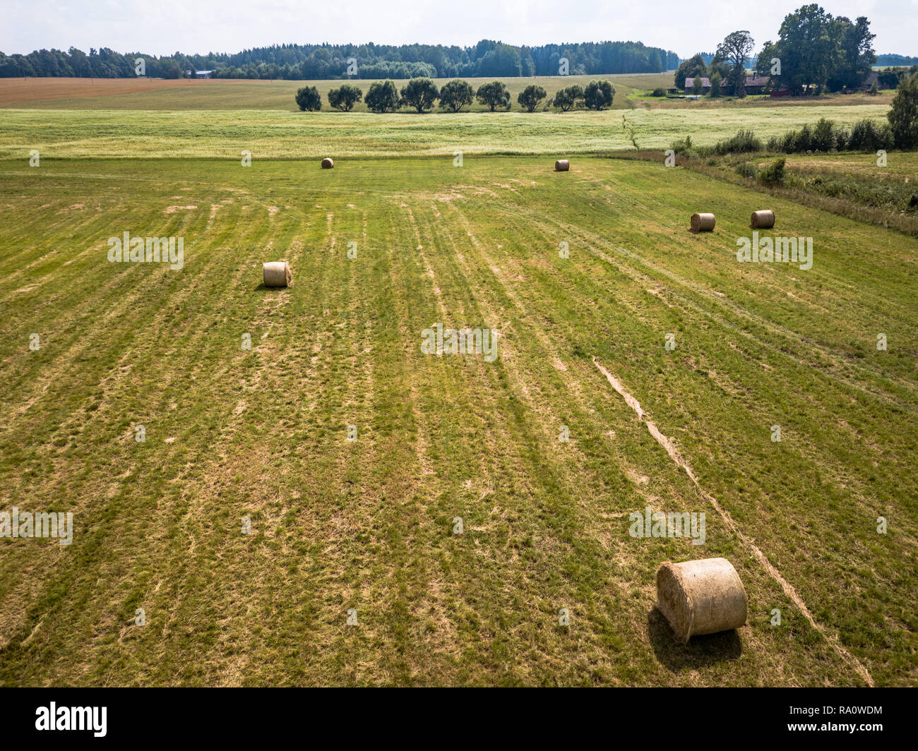 Aerial Drone Photo of Hay Rolls in the Wheat Field, Surrounded with Forests  - Sunny Summer Day - Stock Image