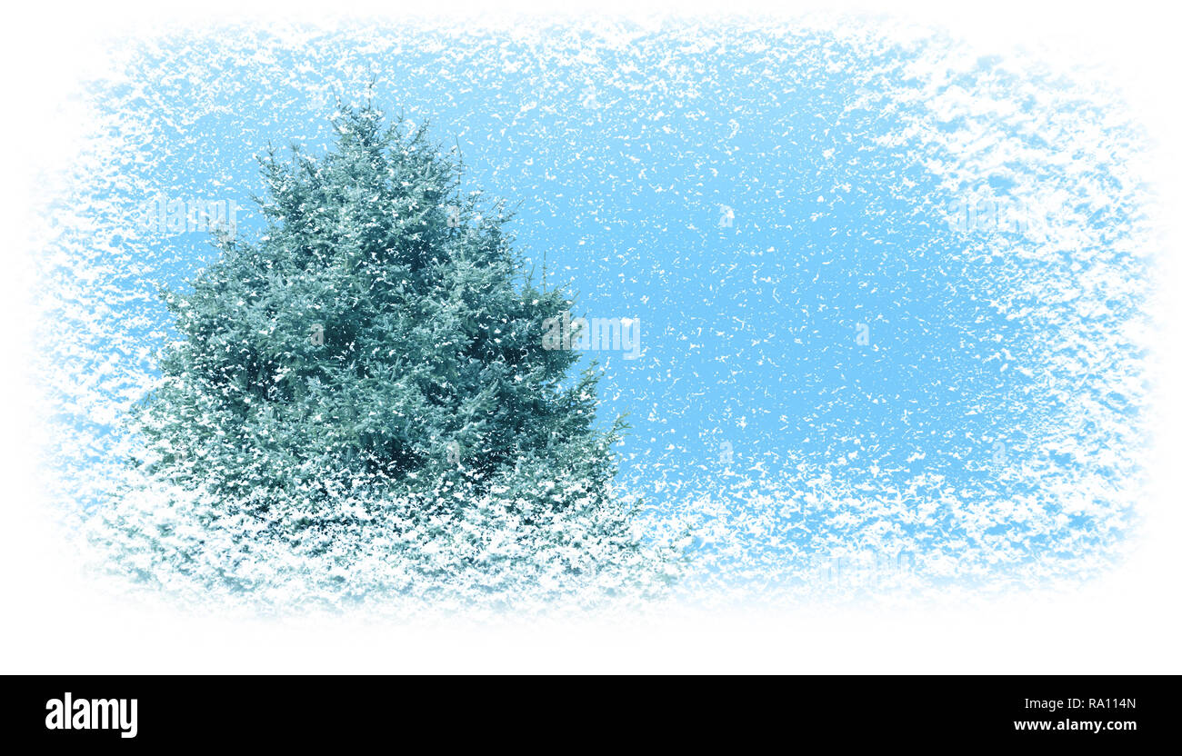 Fir tree in winter covered with snowfall horizontal banner background. Christmas gift card. - Stock Image