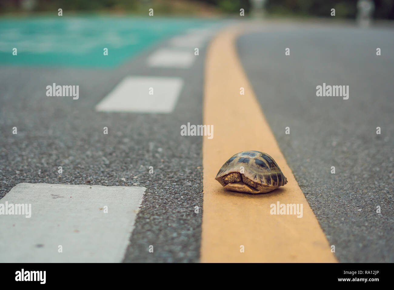 turtle walking down a track for running in a concept of racing or getting to a goal no matter how long it takes - Stock Image