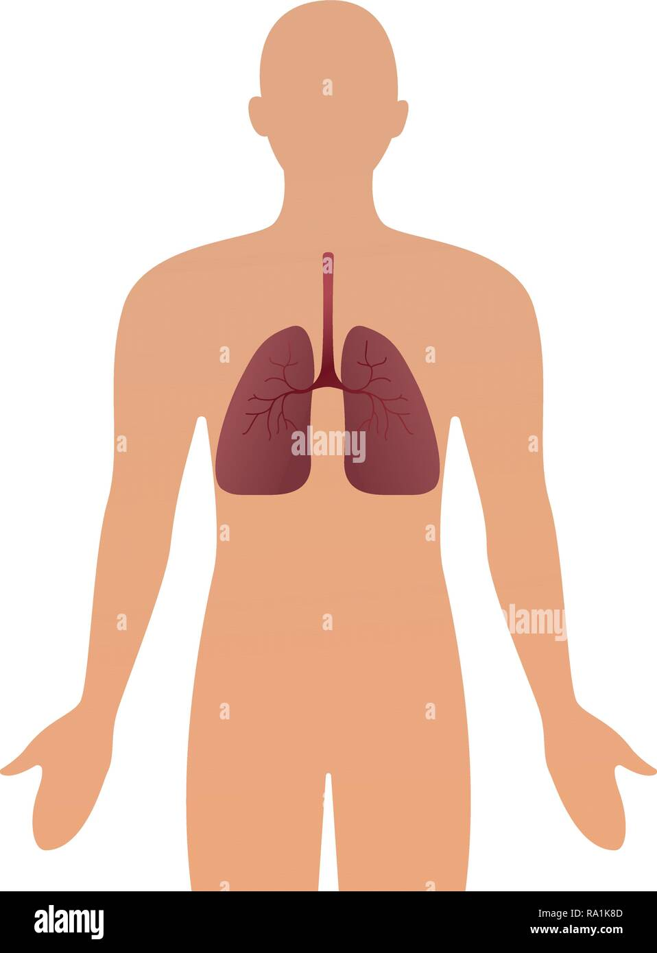 Human silhouette with inflamed respiratory system lungs showing diseases like asthma and bronchitis vector illustration. - Stock Image