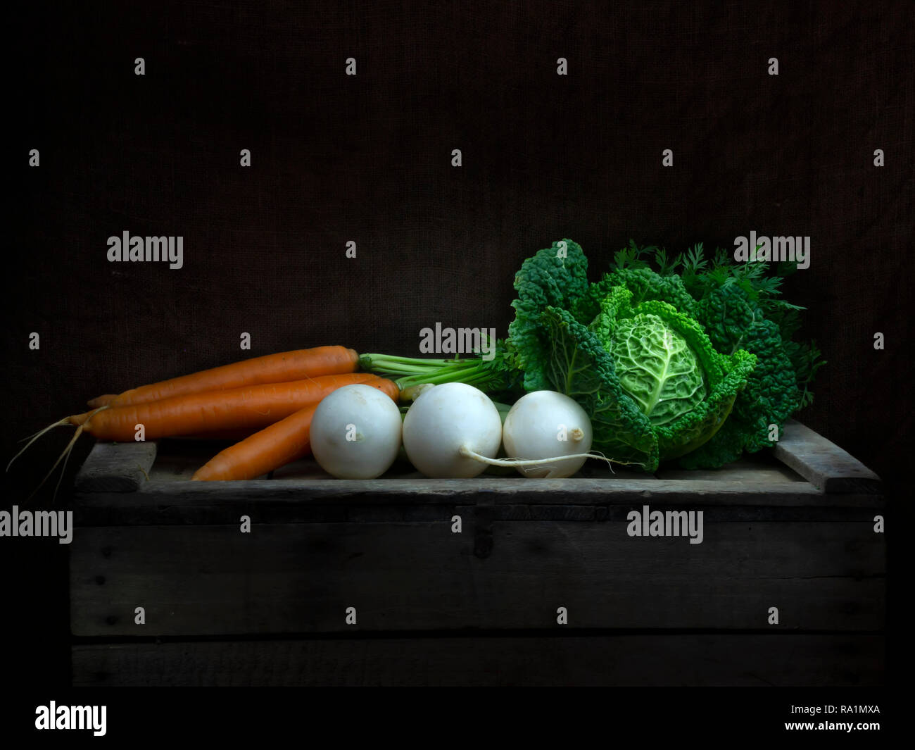 Winter vegetables still life, chiaroscuro Baroque style. Light painting. Cabbage, carrots, turnip. - Stock Image