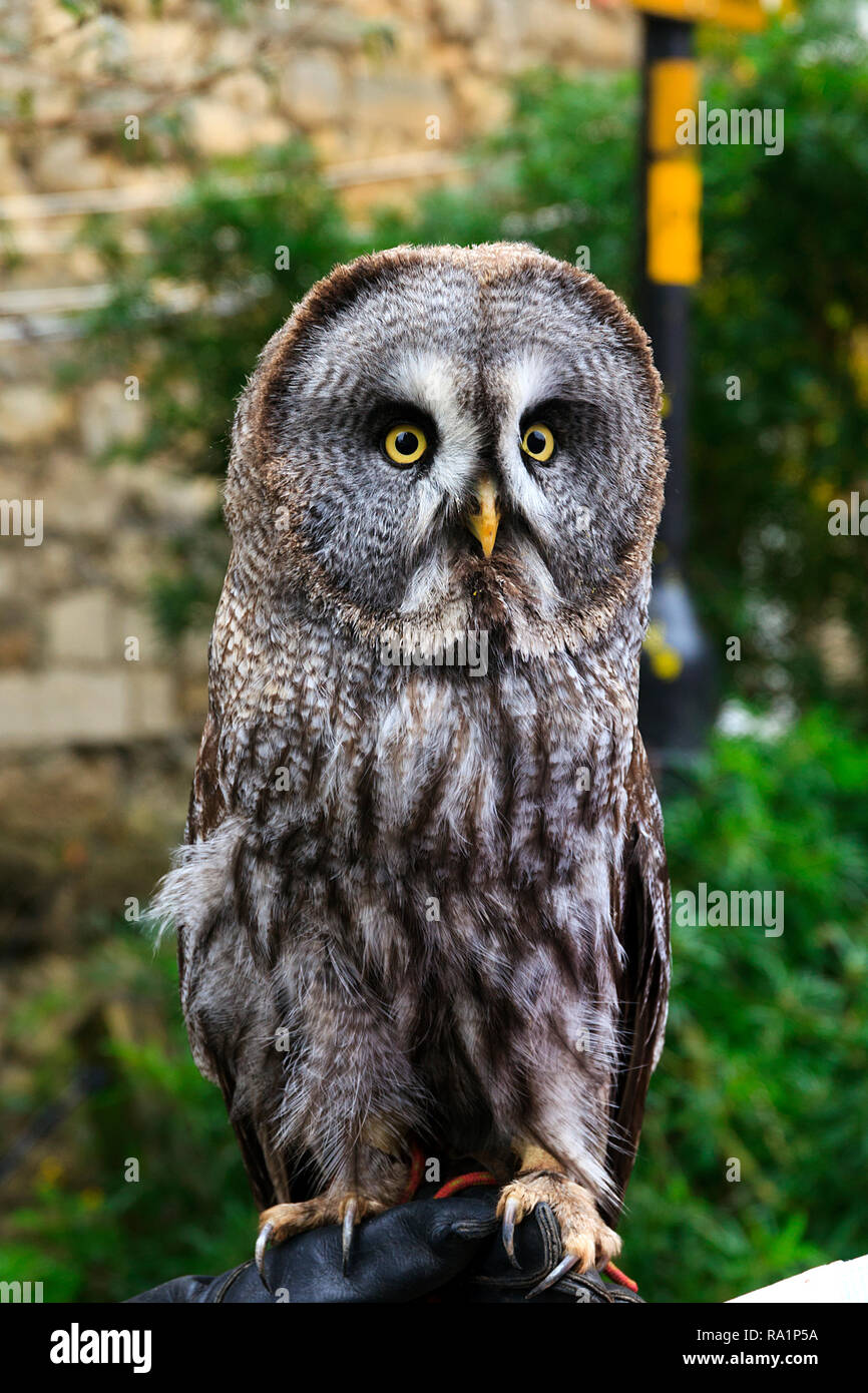 Weihnachtsmarkt Owl.Christmas Owls Stock Photos Christmas Owls Stock Images Alamy