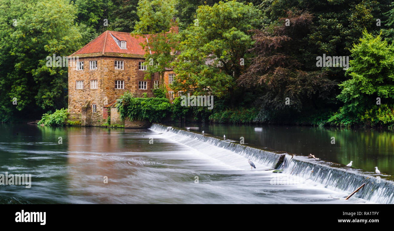 Standing on the west bank of the fast flowing River Wear looking across the weir to Old Fulling Mill which peaks out through the over grown trees. - Stock Image