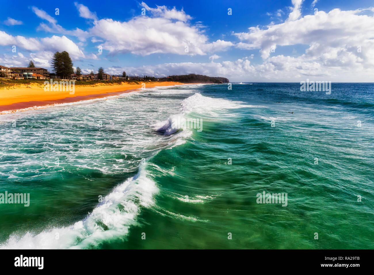 Rolling waves of emerald green Pacific ocean water on the sandy Narrabeen beach with floating surfers under blue summer sky. - Stock Image