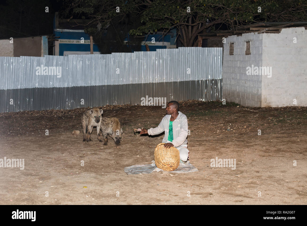 Harar / Ethiopia - May 2017: Wild hyenas being fed at night as a tourist attraction in Harar, Ethiopia. - Stock Image