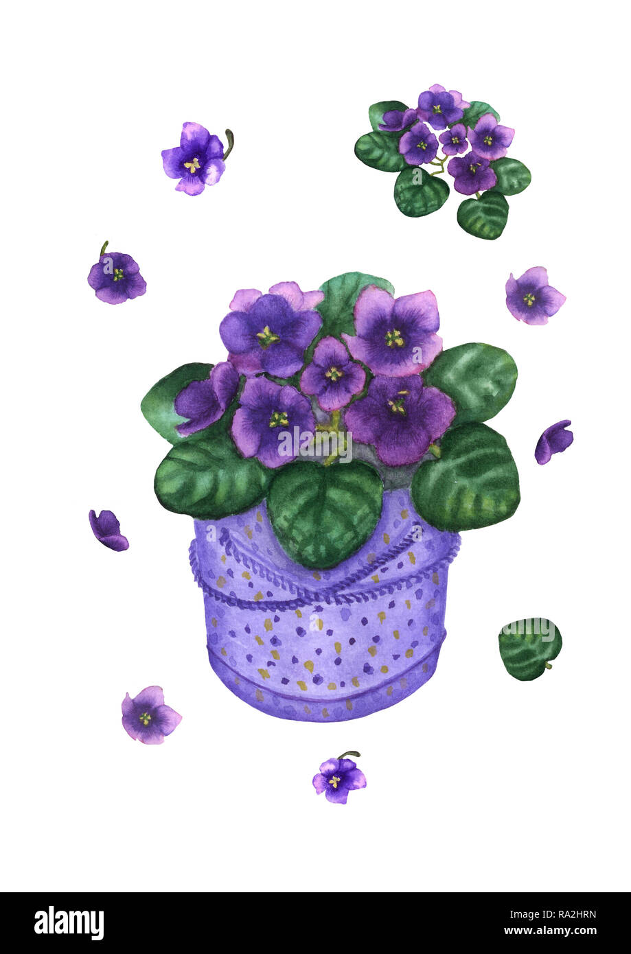 Hand drawn watercolor violet viola plant in dotted gift box  Vintage