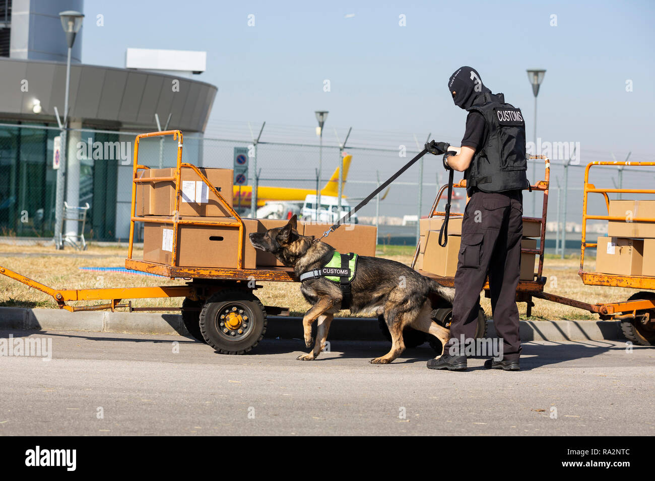 Customs and border protection officer and Drug enforcement administration special force participates with a specialized dog in a training at the airpo - Stock Image