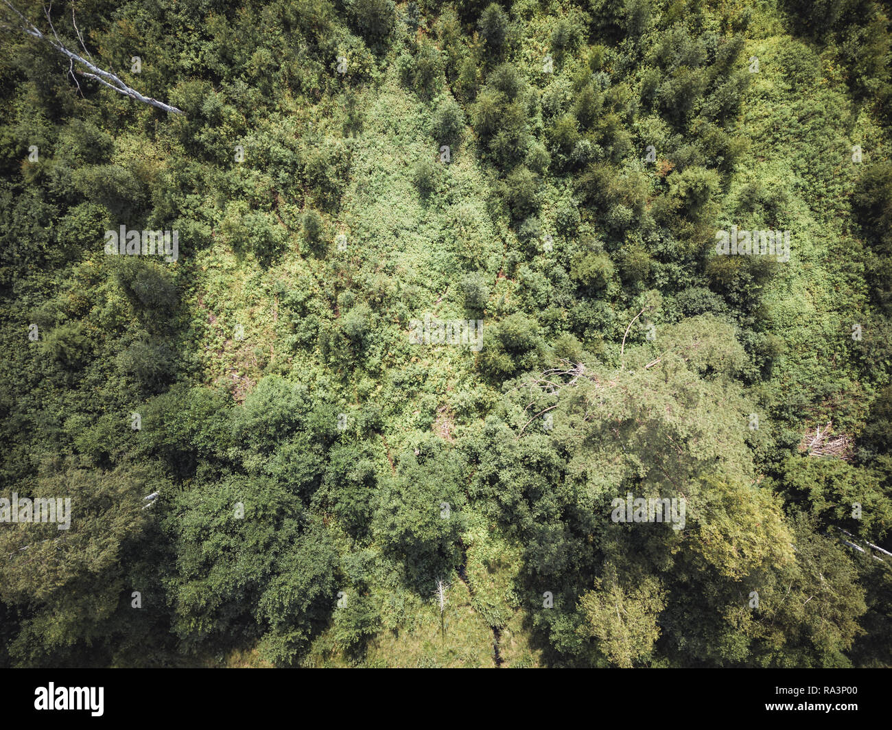 Aerial Drone Photo of the Countryside Forest, Top Down View in Sunny Summer Day - Background Material, Vintage Look Edit Stock Photo
