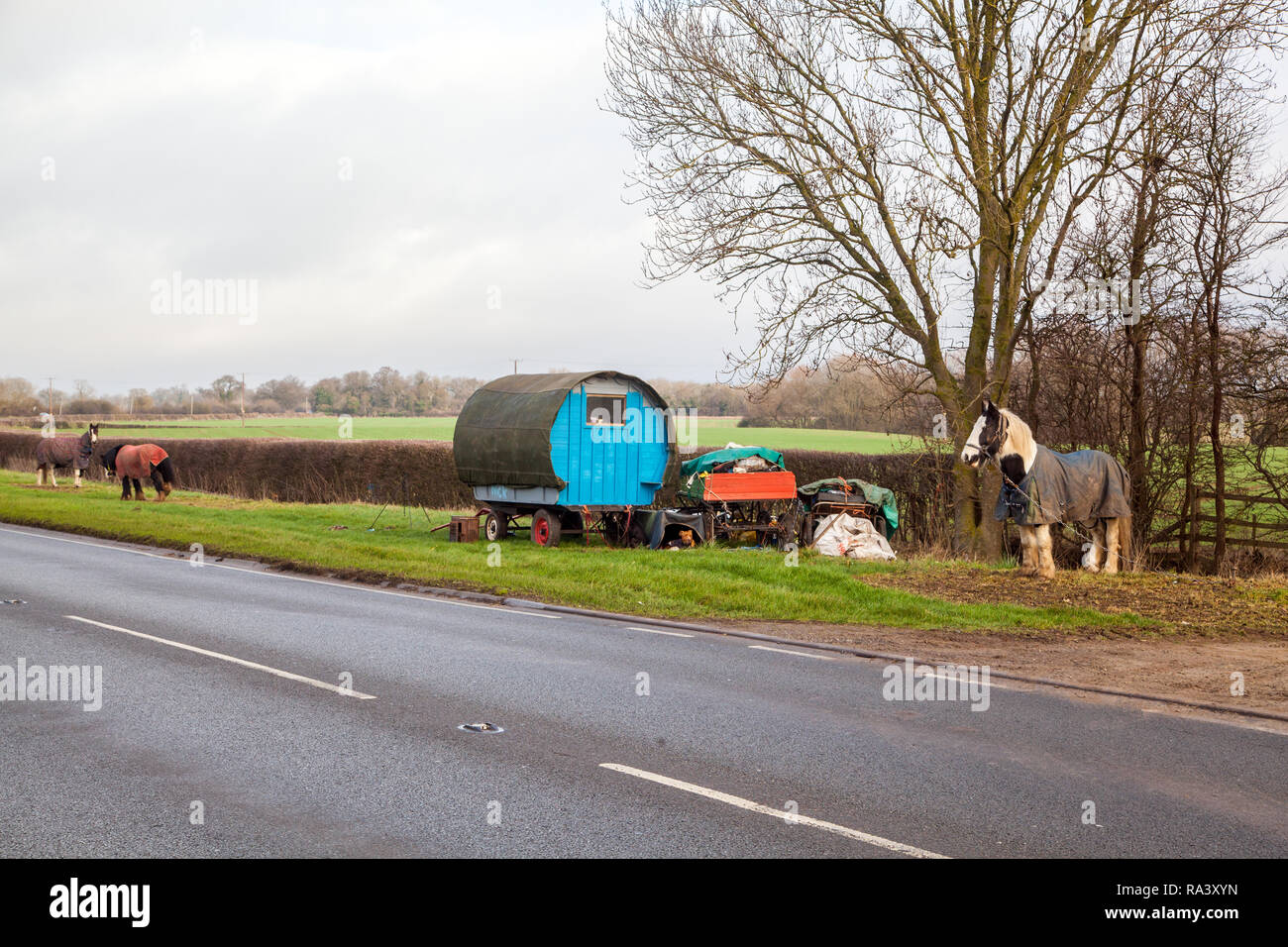 Travelers living in a traditional type horse drawn Romany gypsy caravan  stopped on the grass verge at the side of the road for their horses to graze - Stock Image