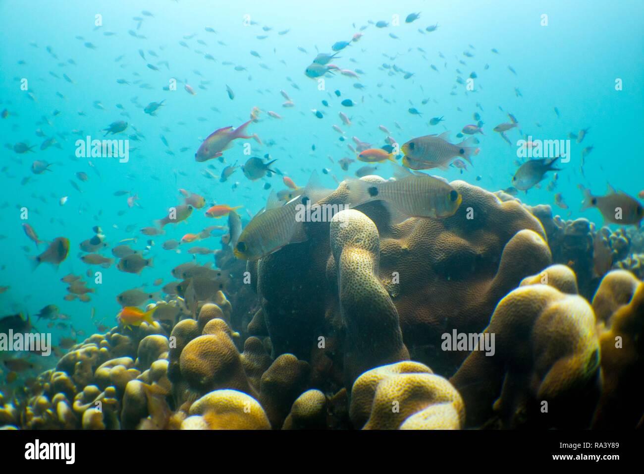 Scuba diving in Mafia Island, Tanzania - Stock Image