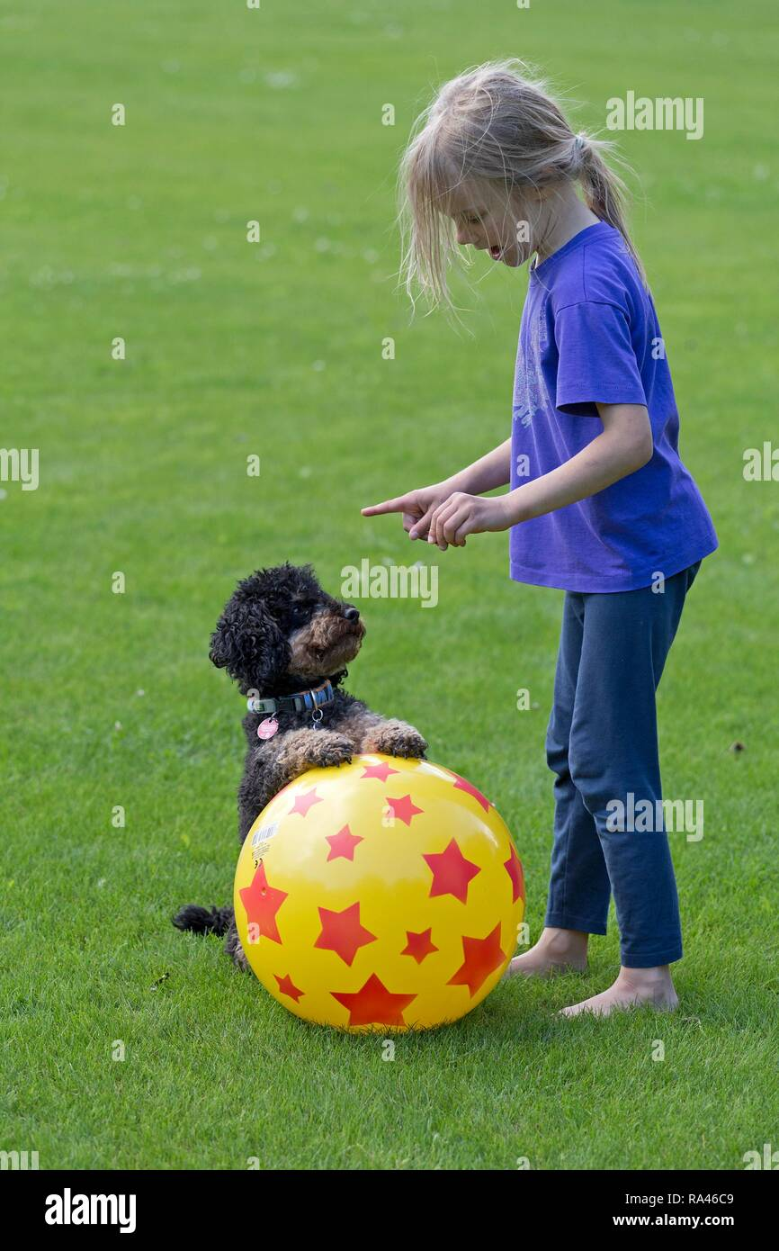 Little girl trains dog, Germany - Stock Image