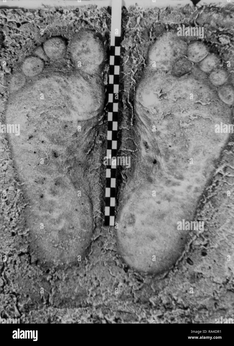 Old archival black and white phtoto of plaster cast of footprints from criminal's bare feet taken at crime scene for criminal investigation - Stock Image