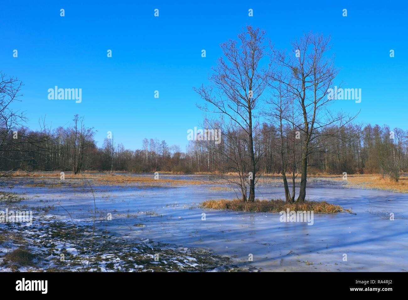 Polska - Mazowsze - Warszawa - Kampinoski Park Narodowy - podmokle  polany lesne w czasie przedwiosnia w okolicach Truskawia  Poland - Mazovia - Warsaw - Kampinoski National Park - flooded forest gras - Stock Image